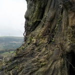 """A Monster Calls"" (2016) - Movie Review"
